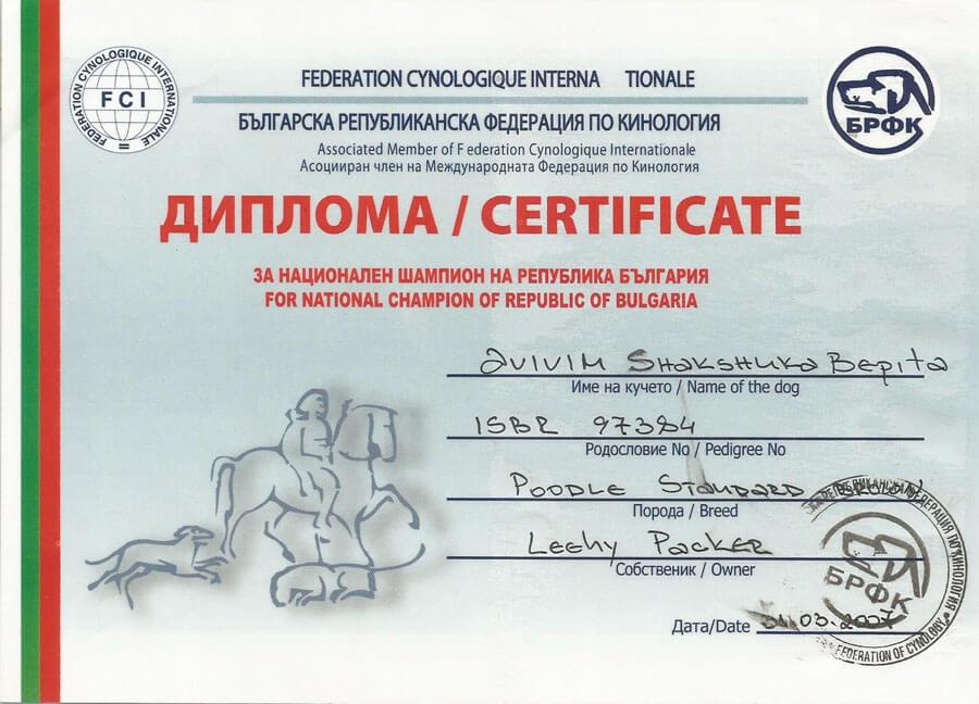 https://brownpoodles.com/wp-content/uploads/2017/10/Shaksuka-Bulgaria-Champion-900x648.jpg