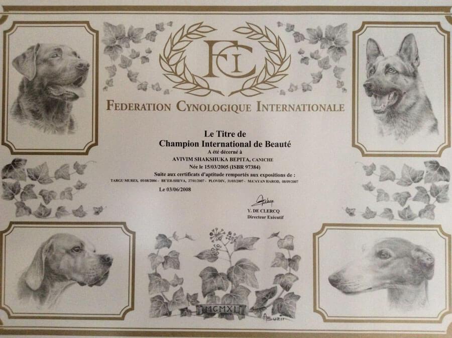https://brownpoodles.com/wp-content/uploads/2017/10/Shaksuka-International-Champion-900x672.jpg