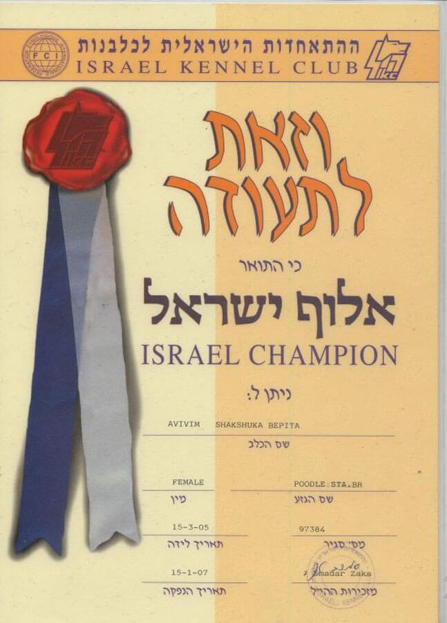 https://brownpoodles.com/wp-content/uploads/2017/10/Shaksuka-Israel-Champion-647x900.jpg