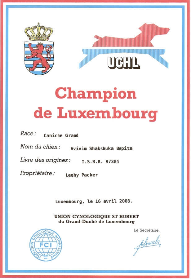 https://brownpoodles.com/wp-content/uploads/2017/10/Shaksuka-Luxembourg-Champion-616x900.jpg